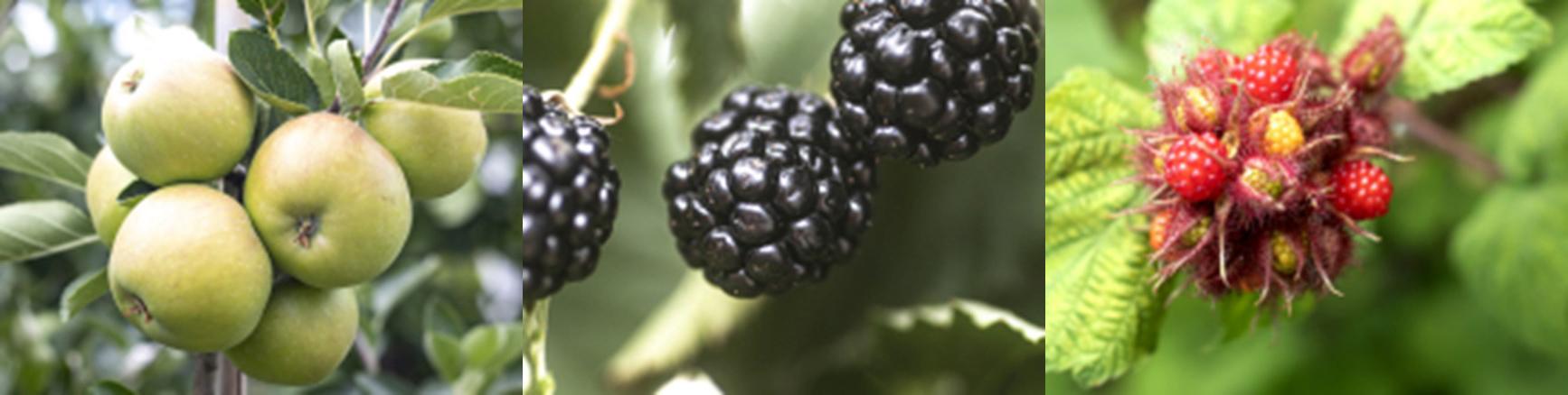 3_fruiten
