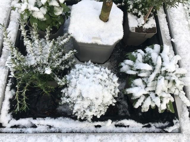 foto1 sneeuw