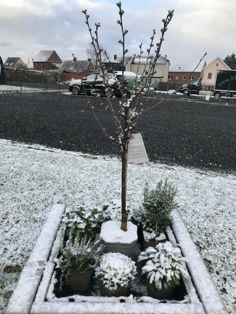 foto2 sneeuw