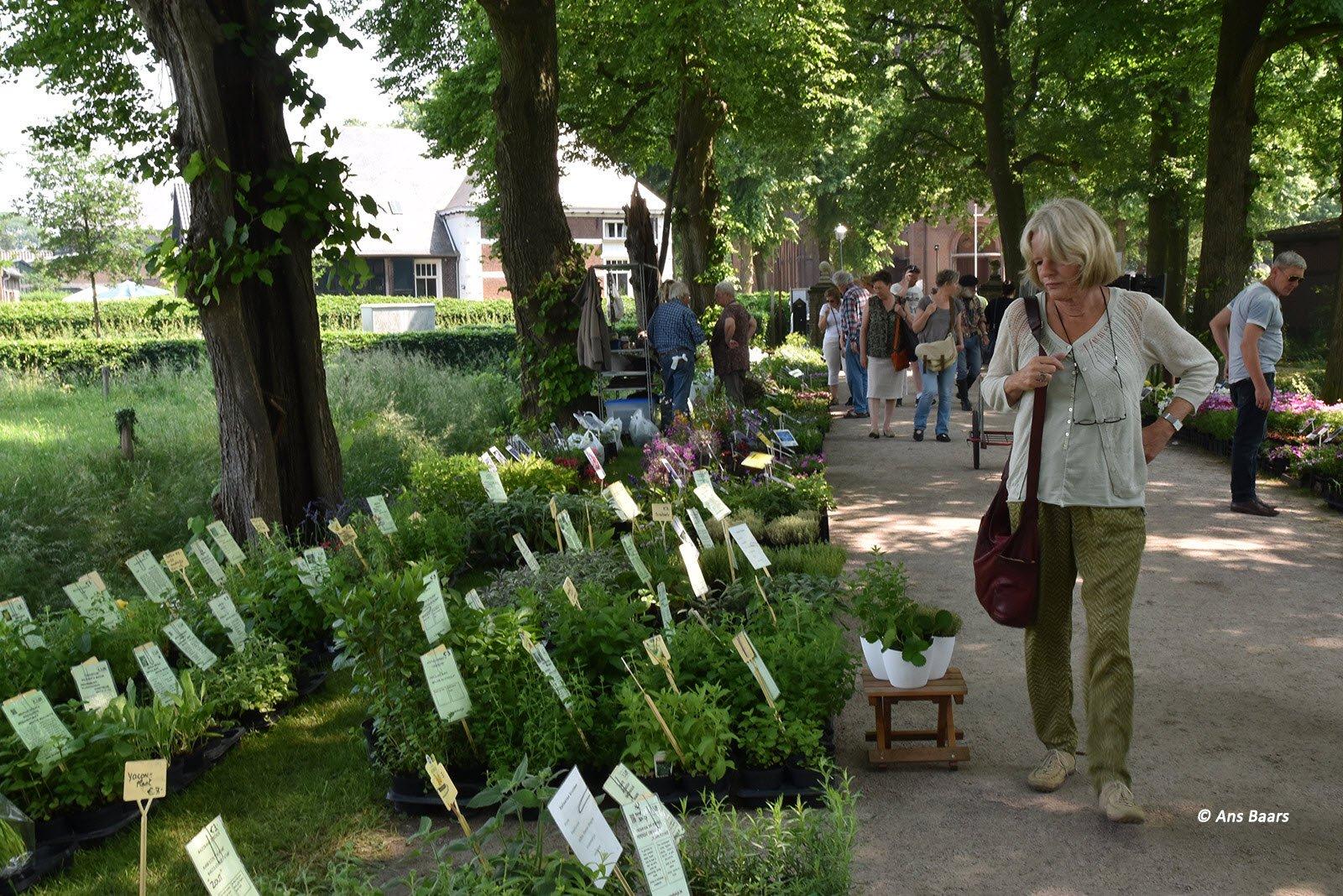 Tuinmarkt-Hernen-2016-39